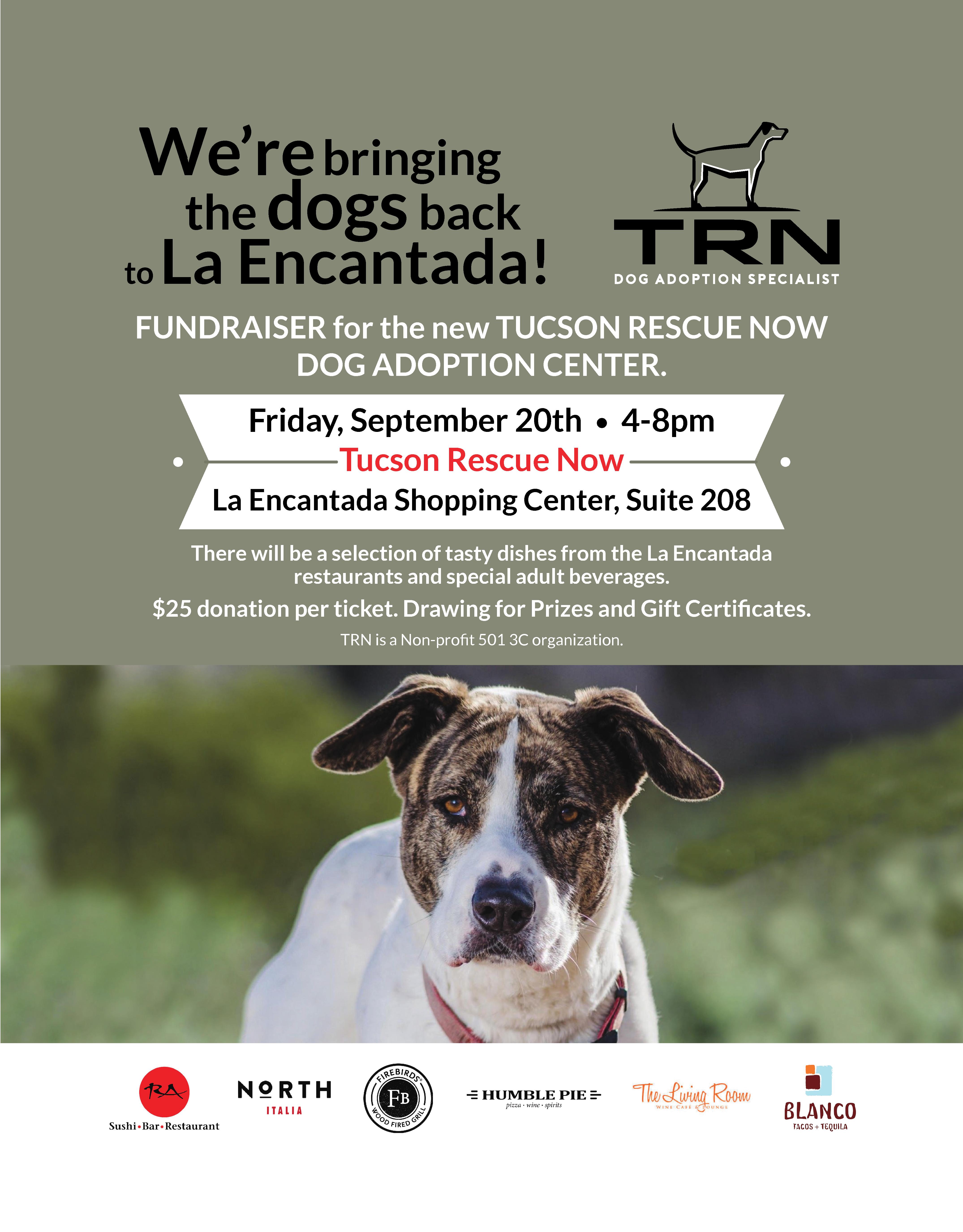 dog, dog rescue, ad, promo