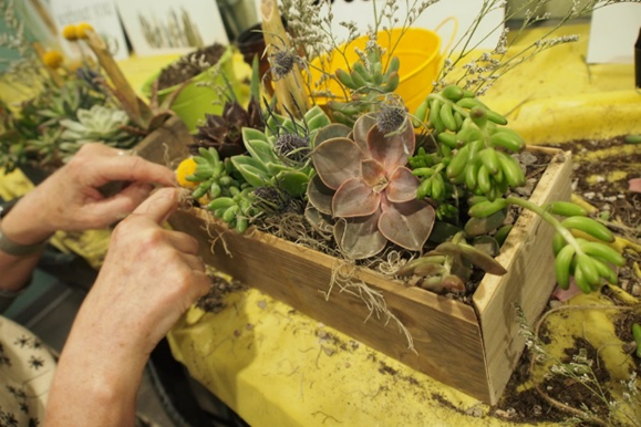 Two hands working on a wooden boxed succulent garden