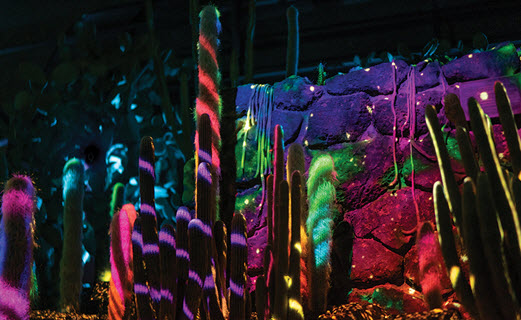 Desert Botanical Gardens, Light Up Your Night Exhibit