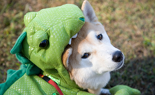 Image of white dog in a halloween costume