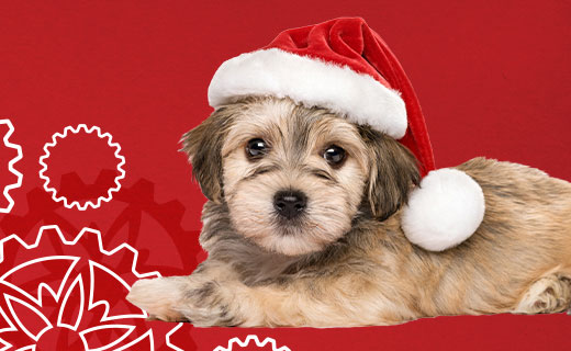 Dog wearing santa hat on a red background