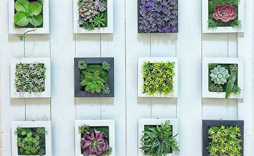 succulents in small planters