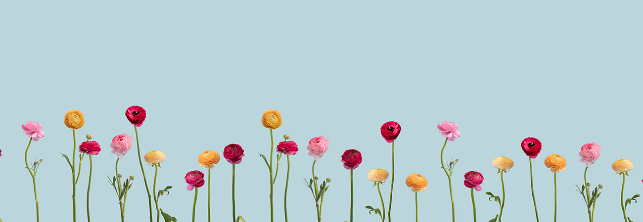 A row of colorful flowers against a blue background