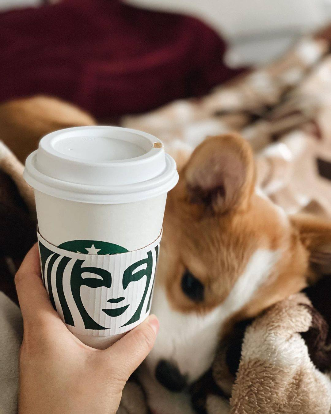 Person holding a Starbucks cup and a puppy laying on a blanket