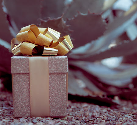 present wrapped with gold shimmery paper with gold bow in front of a succulent