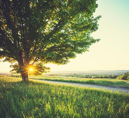 tree with sun setting