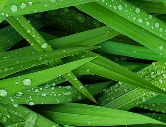 grass with fresh water drops